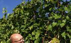Winnica Jasiel w Jareniówce pod Jasłem