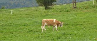 Pastwisko w Bieszczadach. Fot. Adam Cyło