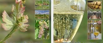 Podręczniki dla winiarzy podkarpackich autorów nagrodzone w Paryżu