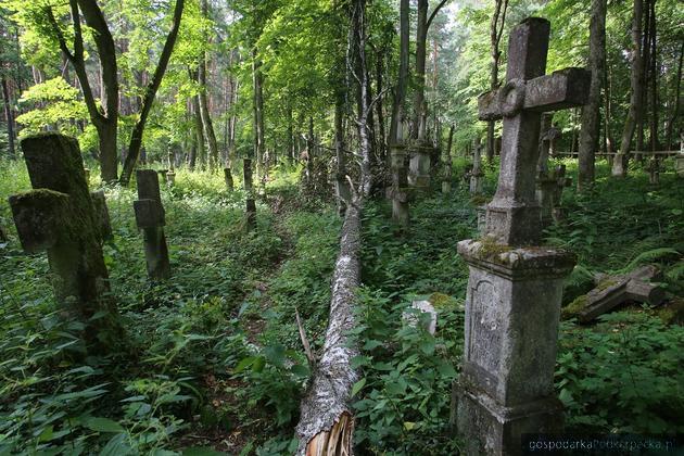 Upadające drzewo zniszczyło zabytkowe nagrobki