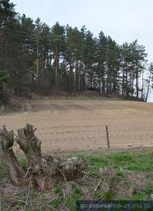 Widok na wzgórze z drogi powiatowej. Fot. KZ