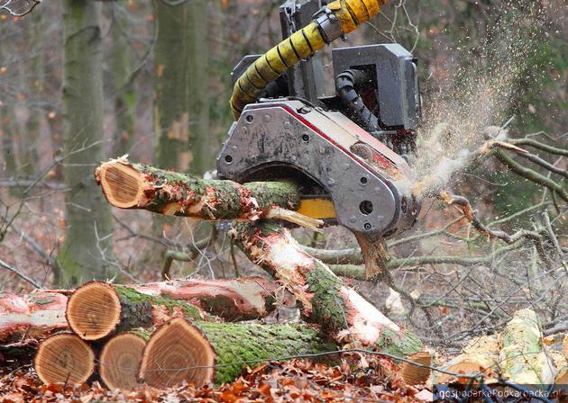 Wycinanie drzew – nowe prawo z 2017 roku