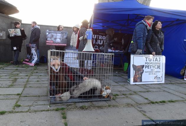 Happening obrońców zwierząt w Rzeszowie