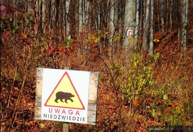 Ostrzeżenie ustawione przez leśników. Fot. RDPL w Krośnie