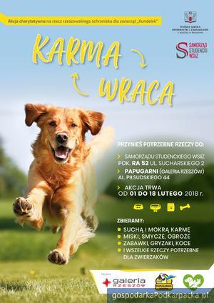 Karma wraca – akcja na rzecz zwierząt w Rzeszowie