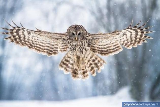 Zimowy Anioł. Fot. Michał Kut