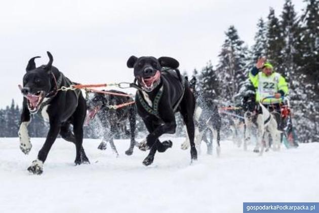 """Wyścig psich zaprzęgów """"W Krainie Wilka"""". Fot. Maciej Goclon – III wyróżnienie"""