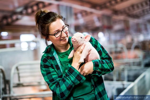 """""""Akademia Rolnika Gobarto 500"""" – szkolenie dla hodowców świń"""