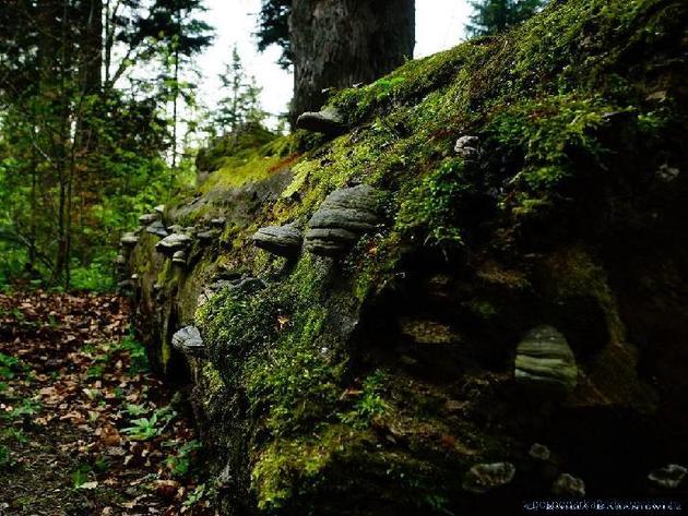 Turnicki Park Narodowy – opinia Lasów Państwowych
