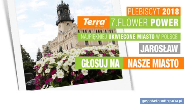 Plebiscyt Terra Flower Power - najpiękniej ukwiecone miasto