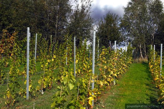Winnica Dwie Granice (Przysieki, Bączal Górny)