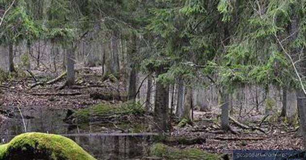 Fot. www.oddajcieparkinarodowi.pl