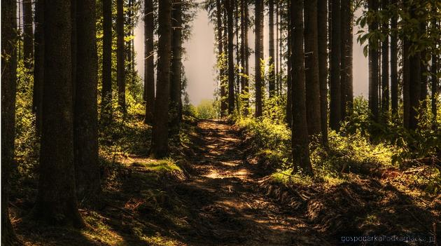 Blisko połowa województwa podkarpackiego to obszary chronionej przyrody