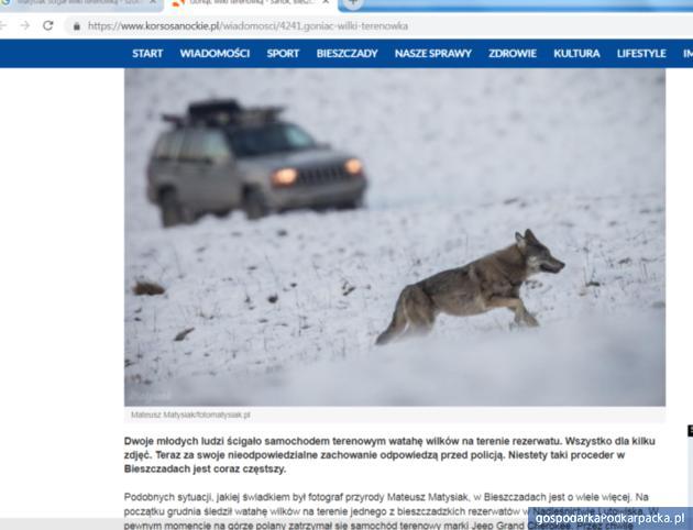 Kierowca ścigający terenówką wilki w Bieszczadach ukarany grzywną