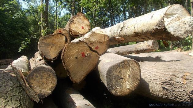"""""""Turnicki Park Narodowy"""": Ekolodzy postulują, Lasy Państwowe odpowiadają"""