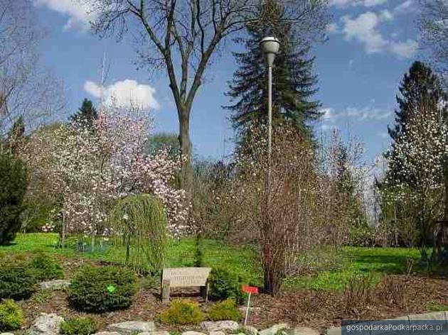 Arboretum w Bolestraszycach przebuduje alejki i zainstaluje monitoring
