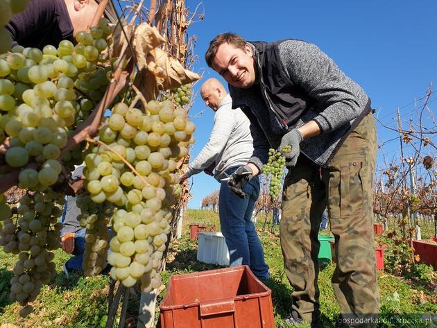 Koniec winobrania w Winnicy Jasło