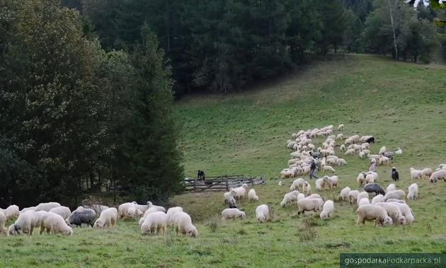 Bioróżnorodność beskidzkich łąk i pastwisk a ich możliwości produkcyjne