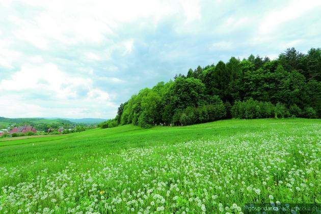 Sanoczek w gminie wiejskiej Sanok. Fot. gmina Sanok