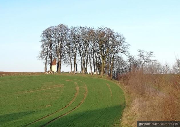 Gmina Orły zrekonstruuje cmentarz z I wojny światowej w Drohojowie