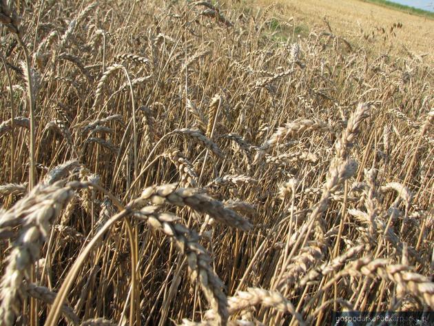 Ministerstwo Środowiska chce zlikwidować nierejestrowane uprawy roślin modyfikowanych genetycznie
