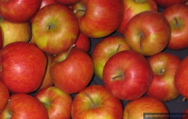 Polska liderem w produkcji i eksporcie jabłek