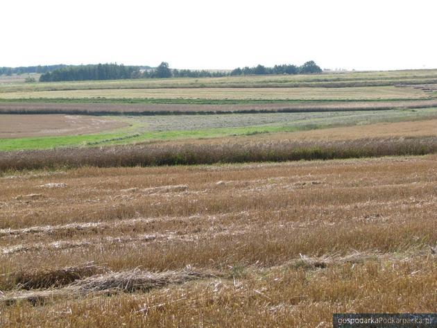 Działki rolne na Podkarpaciu drożeją, ale niewiele